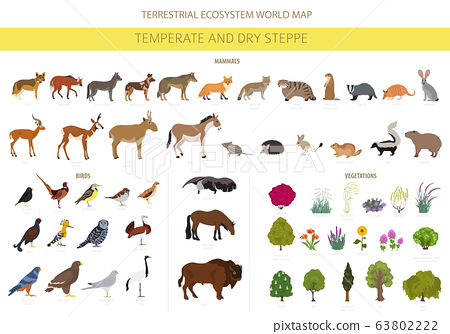 Temperate and dry steppe biome, grassland, prairie, pampas ecosystem 63802222