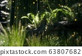horizontally bending tree trunk with ferns 63807682