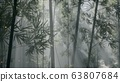 asian bamboo forest with morning fog weather 63807684