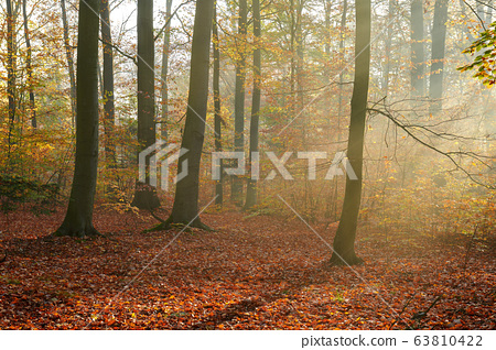 Autumn morning in the forest 63810422