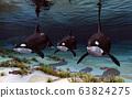 Three killer whales 63824275