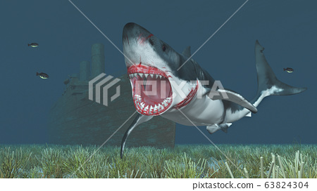 Shipwreck and great white shark 63824304