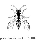 Wasp line drawing cartoon for adult antistress coloring page. Bee isolated on white background. Bumblebee Hand drawn doodle, graphic vector illustration. Zentangle style. Insect sketch Stained glass 63826082