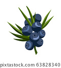 Hand drawn branch blueberry berries with leaves. Fresh summer berries. Fruit botany cartoon vector illustration. Fresh organic food 63828340
