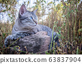 Blue-eyed cat laying in the grass. 63837904