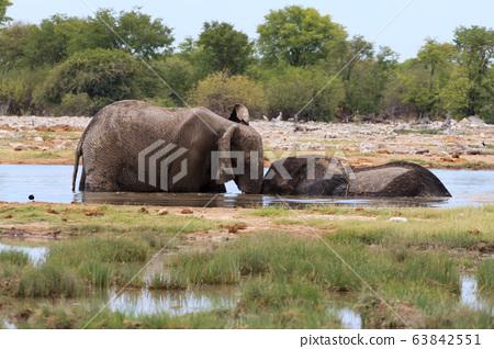 Couple of elephants 63842551
