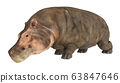 Hippopotamus isolated on white background 63847646
