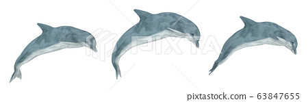 Three jumping dolphins isolated on white background 63847655