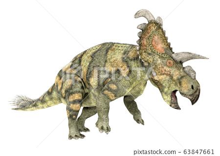 Dinosaur Albertaceratops isolated on white background 63847661