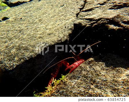 Crayfish scissors 63854725