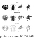 Vector design of insect and beetle sign. Collection of insect and halloween stock vector illustration. 63857540