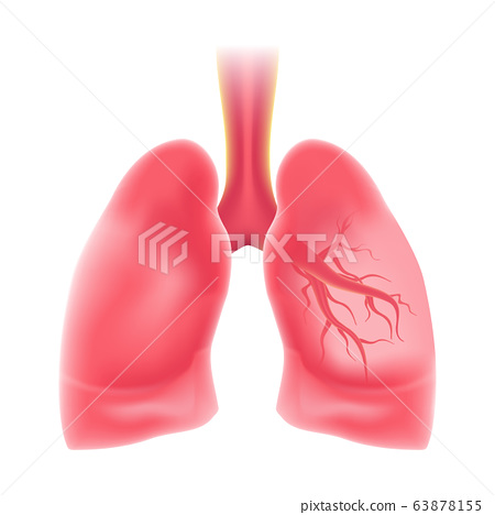 Human's Lungs in realistic isolated design. Internal organs of the human design element. Anatomy. 63878155