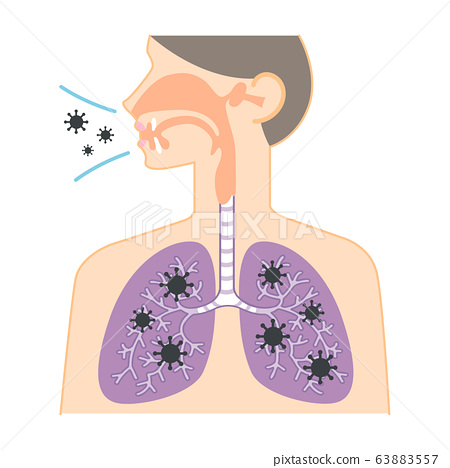 Diagram of nose, throat, and lungs (virus... - Stock Illustration  [63883557] - PIXTAPIXTA