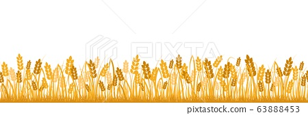 Cartoon yellow wheat field background isolated on white vector flat illustration 63888453
