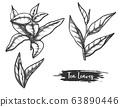 Hand drawn ceylon or indian tea leaves. Twig, stem 63890446