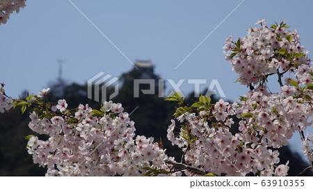 Gifu Castle and Sakura 63910355