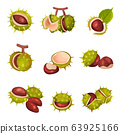 Chestnuts in Cracked Shell with Prickles and Pointed Oblong Leaves Vector Set 63925166
