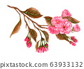 Watercolor pink sakura flowers, plum, almond 63933132
