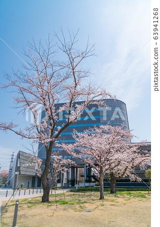 Cherry blossoms at Tokyo Metropolitan University Hino Campus 63941268