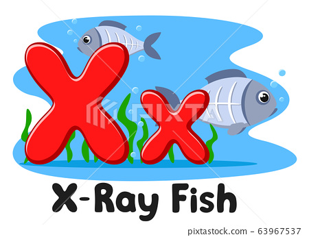 X ray fish letter on a white background. Alphabet 63967537