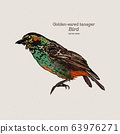 The golden-eared tanager is a species of bird in 63976271