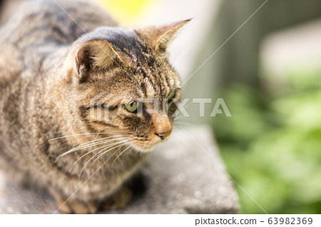 猫咪 63982369