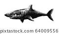 鲨鱼(shark) 64009556