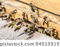 Close up of flying honey bees into beehive apiary Working bees collecting yellow pollen 64010919