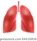 Human lungs isolated on white background. 64016836