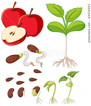 Red apples with seeds and tree growing 64036891