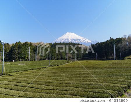 Tea field (spring) 64058699