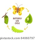 Butterfly life cycle. Insect emergence, transformation or metamorphosis. Caterpillar development stages. Biology cycle vector illustration 64060797