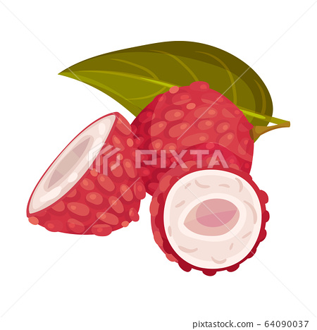 Halved and Whole Lychee Fruit with Rough Red Skin and Sweet Flesh Vector Illustration 64090037