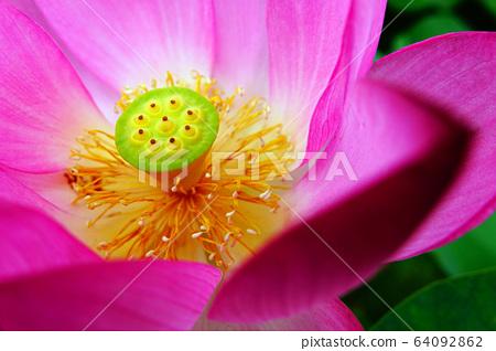 불교를 상징하는 연꽃 64092862