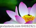 蓮花象徵佛教 64092921
