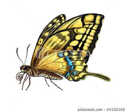 微型蝴蝶 64108168