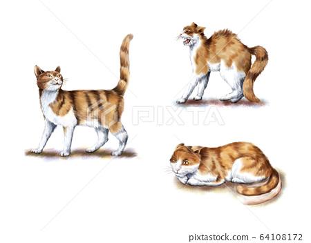 貓的行為 64108172