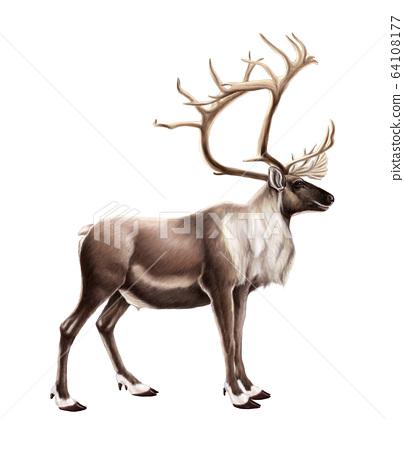 小型驯鹿 64108177