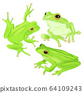Green tree frog vector illustration. Set of three fogs in different poses. Australian hand drawn 64109243