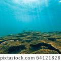 산호와 물고기 64121828