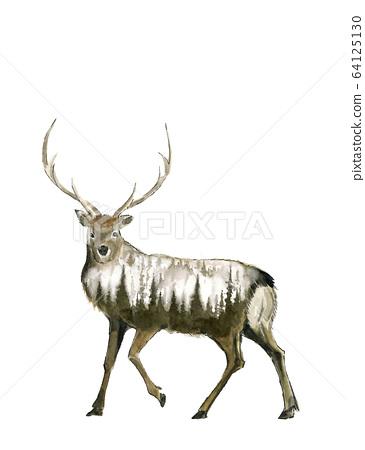 Watercolor deer male 64125130