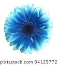 Gerbera Flower Background Vector Illustration 64125772