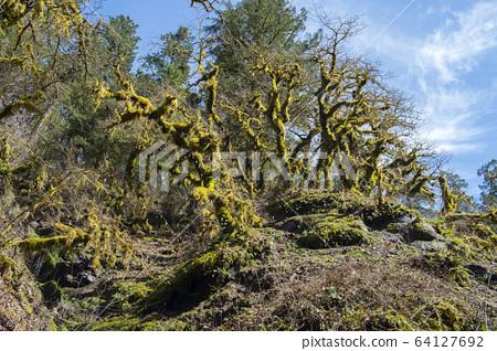 Moss tree 64127692