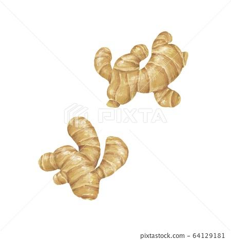 Ginger 64129181