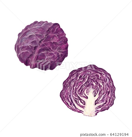 紫甘藍 64129194