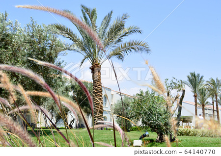 Beautiful grass, vegetation with spikelets  64140770