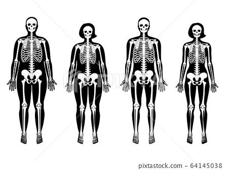Woman and man skeleton anatomy 64145038