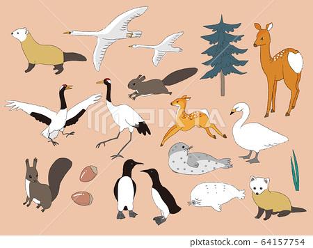 北海道動物2 64157754
