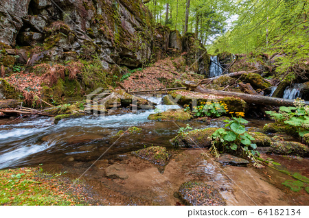 rapid water flow among the forest. trees in fresh 64182134