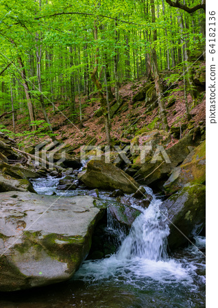 water stream in the beech forest. beautiful nature 64182136